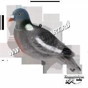 Чучело голубя (вяхирь)