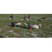 Комплект NRA FUD из 6 шт. складных чучел серого гуся (Greylag)
